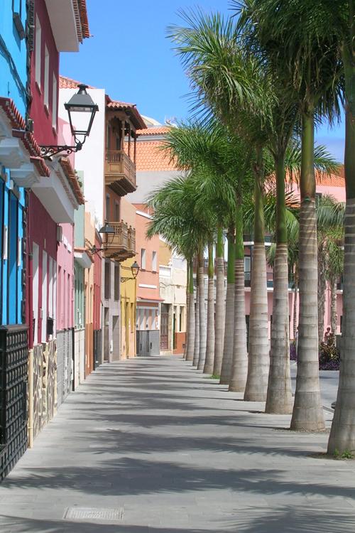 Paseo con palmras junto a viviendas en Acondicionamiento de la Calle Mequinez