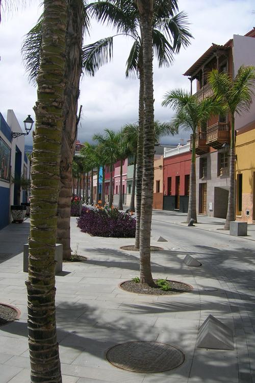 Tramo con palmeras y jardines en Acondicionamiento de la Calle Mequinez