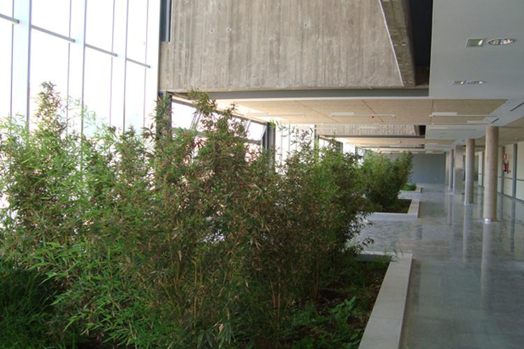Detalle de los jardines interiores en la primera planta del Hospital del Norte