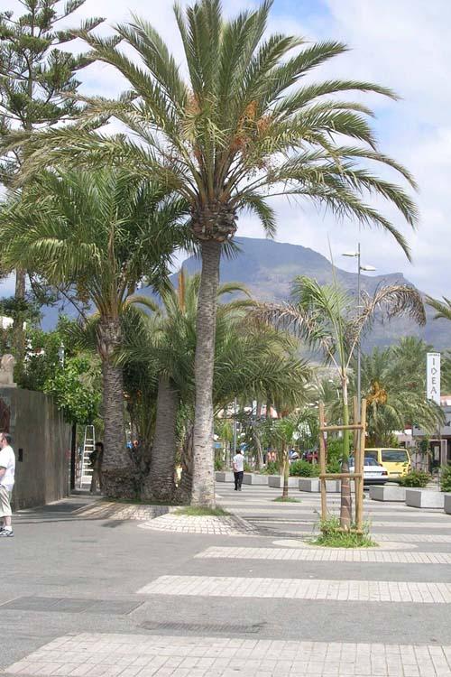 Vista de la zona peatonal de la Avenida Rafael Puig donde se ve la diferencia de textura y color del pavimento