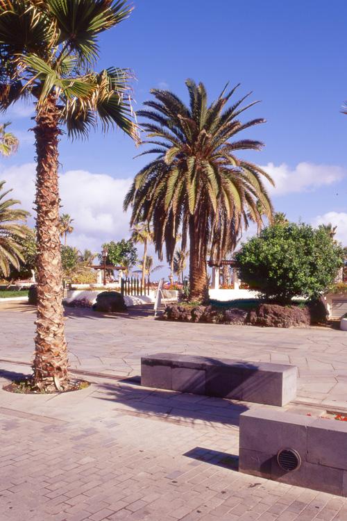 Vista de una de las zonas de descanso con dos bancos junto a una palmera del paseo de Colón